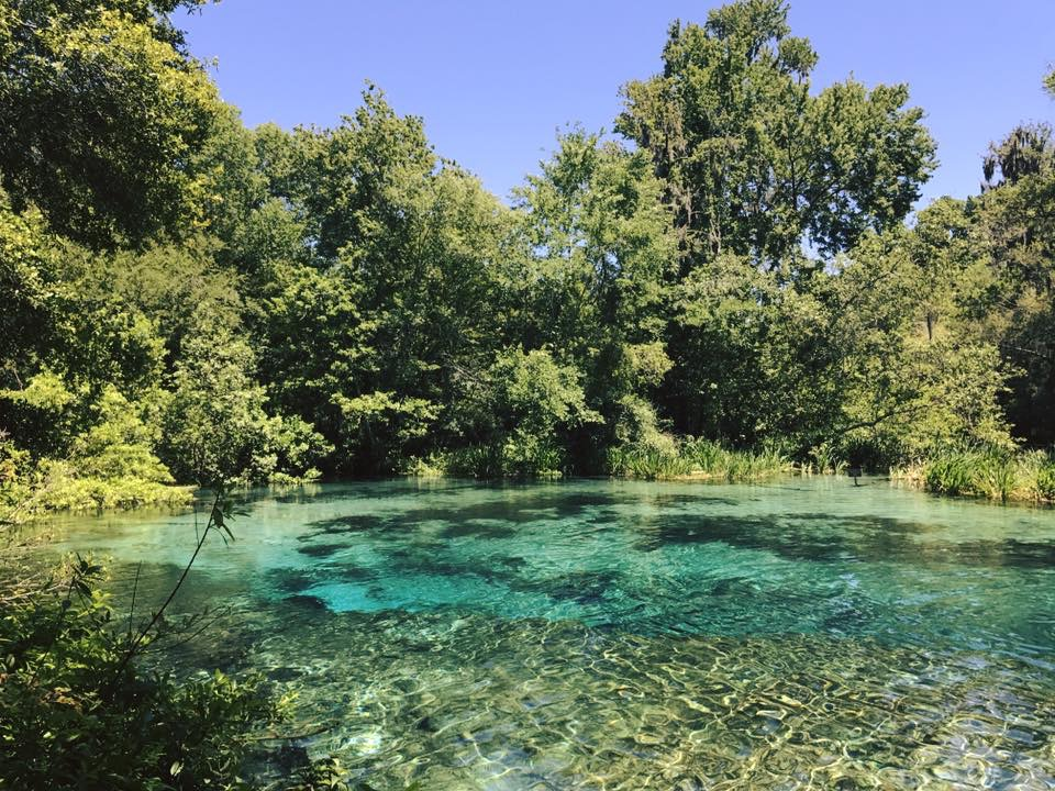 IChetucknee springs state park swimming area, enjoyed by franklintown FL photographer