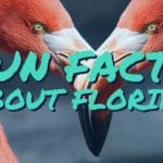 LayZboards | things to do in Central fl