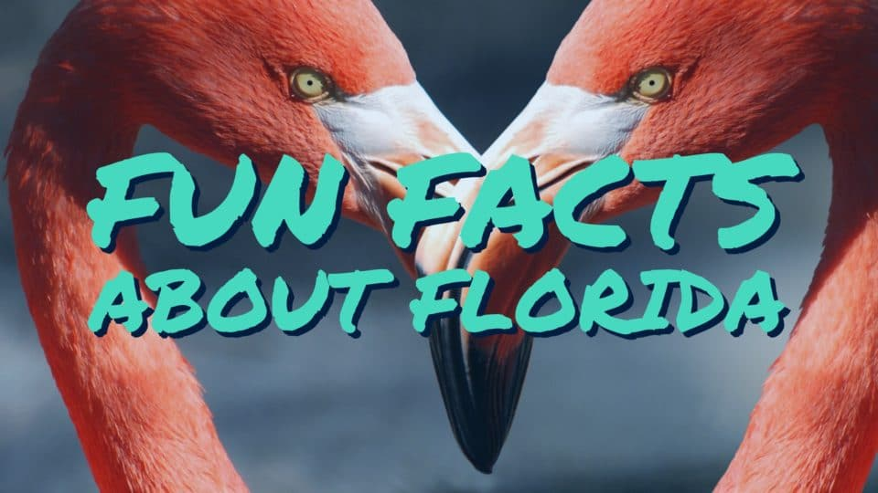 Flamingo picture for fun Facts about Florida by Orlando Florida photographers